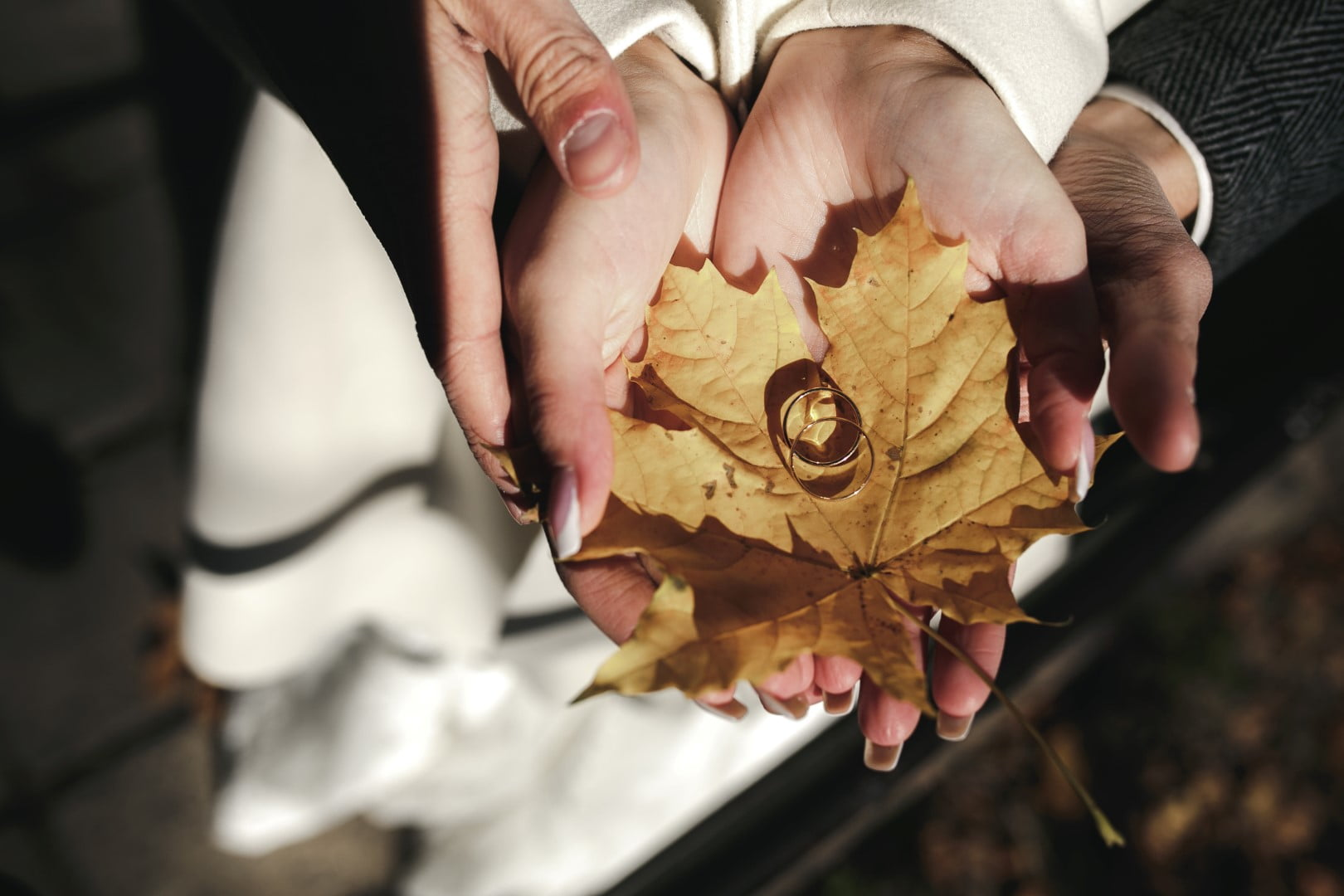 Wedding ring picture on leaves