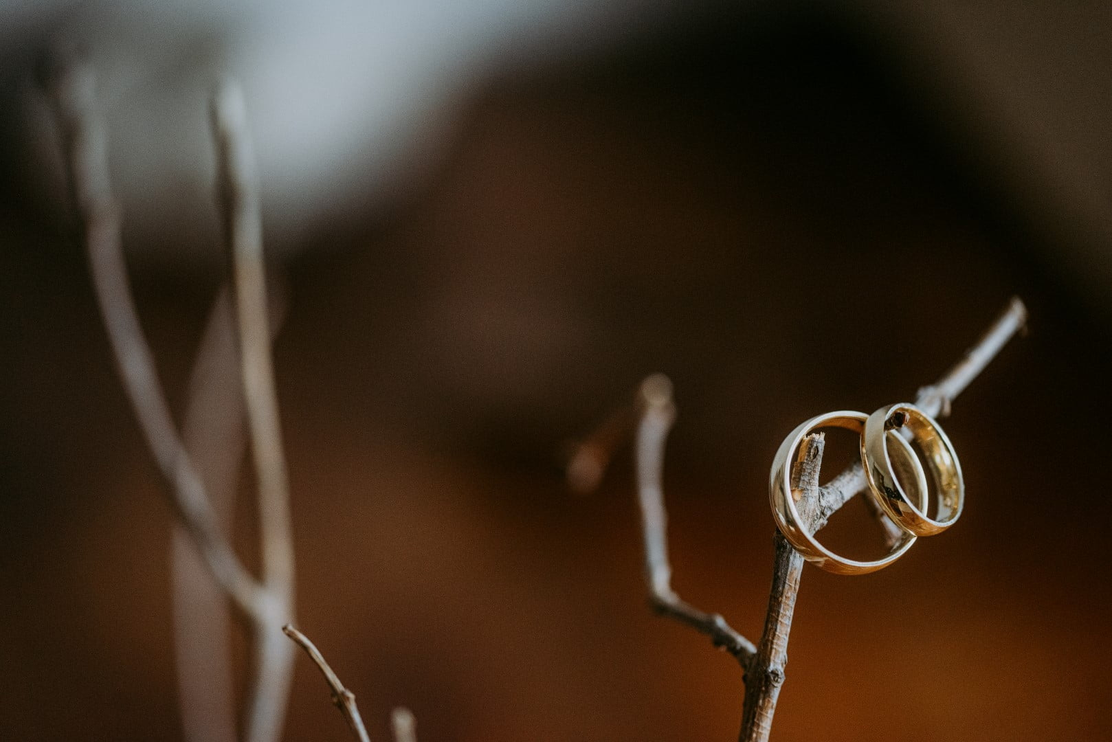 Wedding ring photography idea on branches - Unique Ways to Photograph Your Wedding Rings
